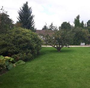Græsplæne vedligeholdes